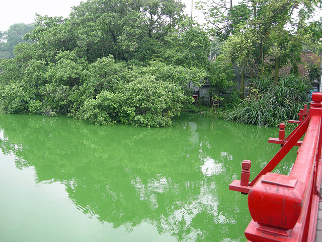 rot -grün