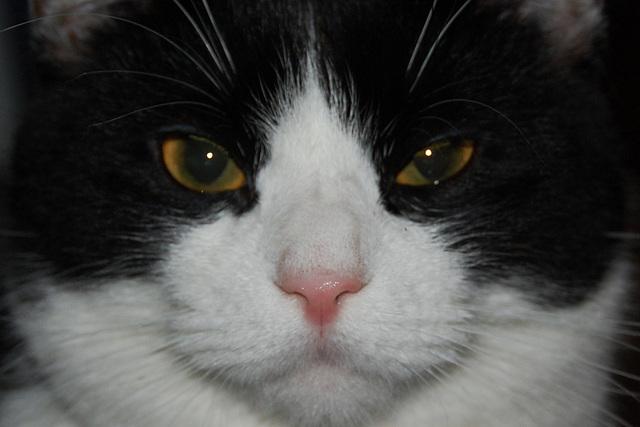 El gato irritado