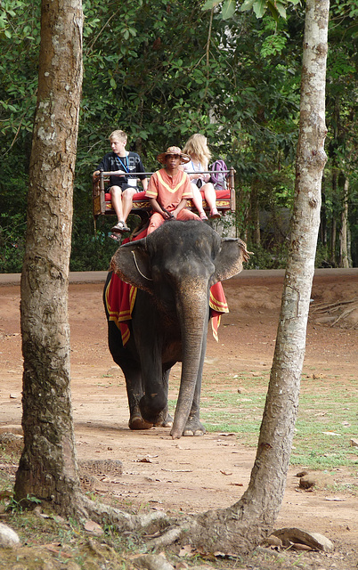 Angkor Thom- Return of the Pachyderm