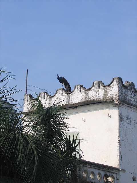 18:1* Dungarpur to Amla Fort BIS - 23