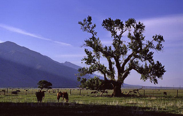 The Tree and the Horse