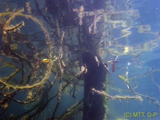 Underwater mirroring