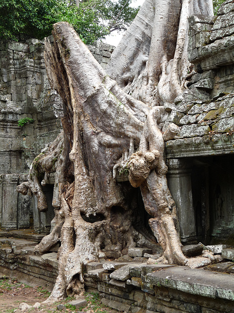 Tree Taking Over the Ruins