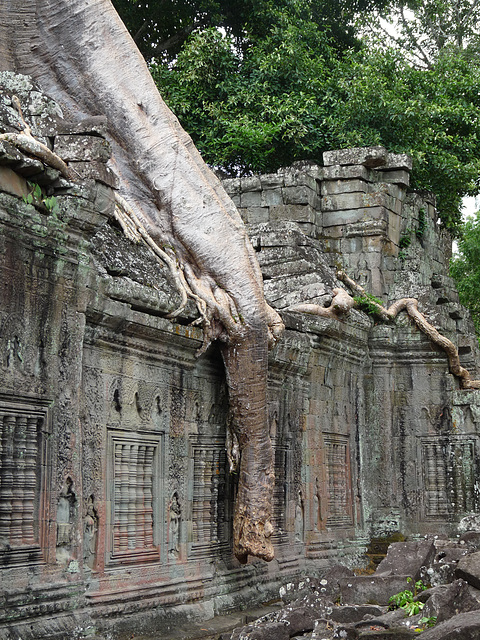 Elephant's Trunk?- No It's a Root of a Tree