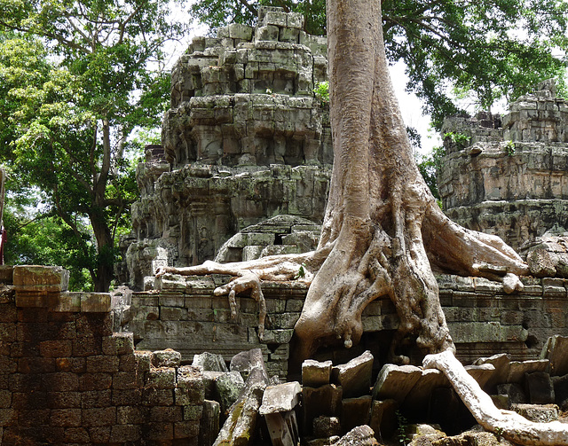 Ta Prohm- Reclaimed by the Jungle #2