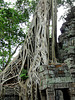 Ta Prohm- Reclaimed by the Jungle #3