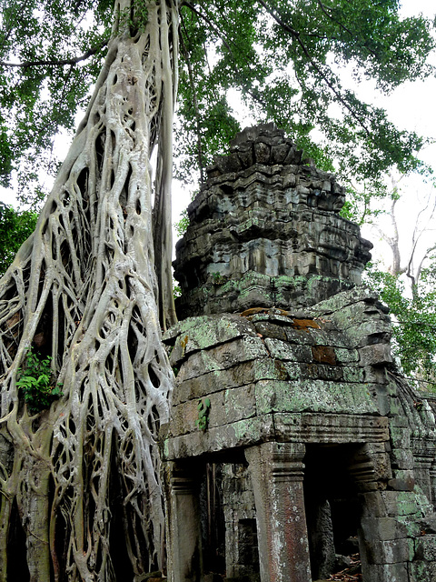 Ta Prohm- Reclaimed by the Jungle #4