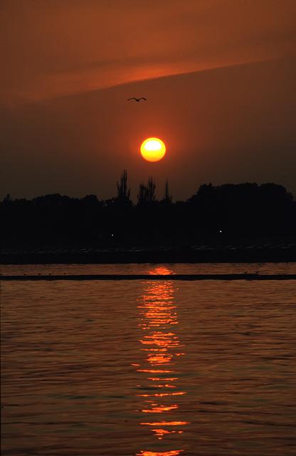 Sunset seagull......