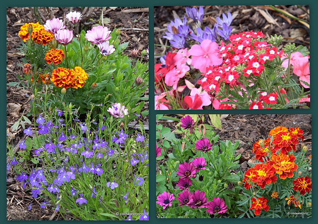 Annual Blooms...