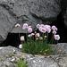 Blumen im Felsen