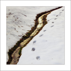 traces along the creek