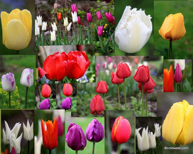 April Garden Tulips 5639913043 o