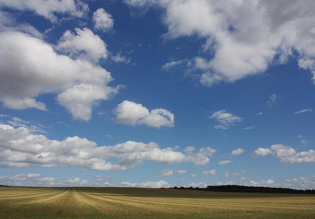 Feld in der Altmark bei Bellingen