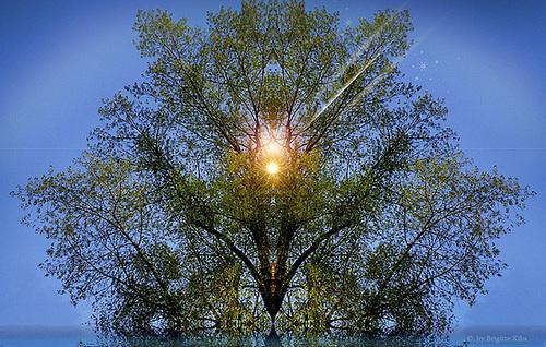 magic tree (chiche)