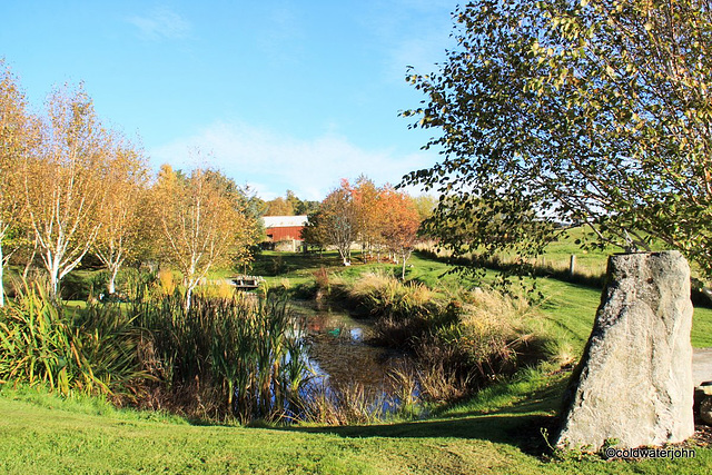 Autumn colours by the pond
