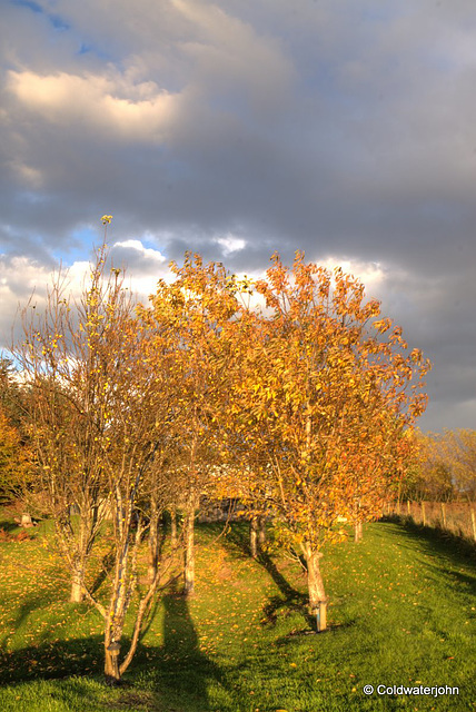 Autumn colours in early evening sunlight