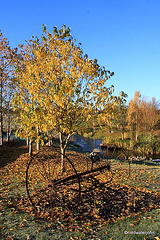 Autumn Frost and sunshine