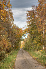 Autumn Journey down country lanes...