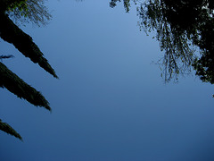 Lisboa, Garden of Foundation Calouste Gulbenkian, trees' fireworks (5)