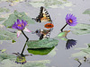 PICT5839bc Lotus and Butterfly Mirroring