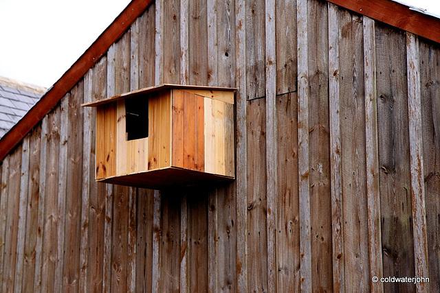 Barn Owls need a home too!