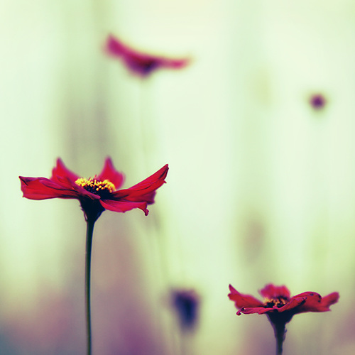 simplicity - dancing..
