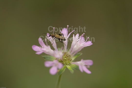 insect on wild flower