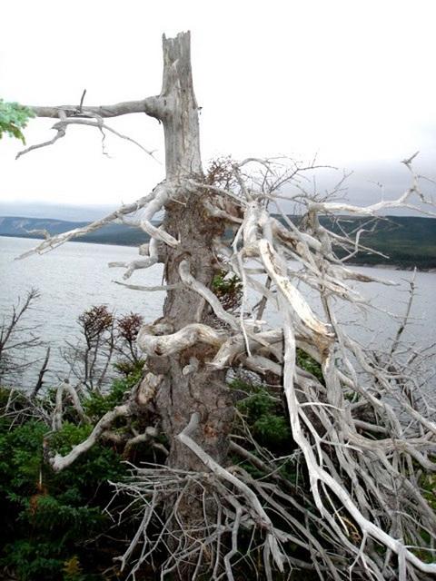 Arbre maléfique / Evil tree