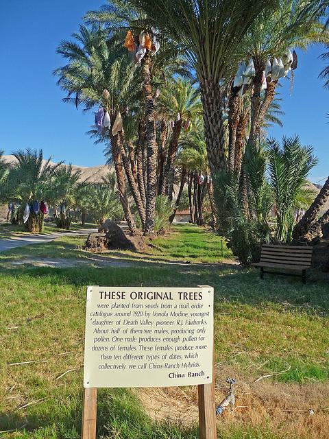 China Ranch Original Trees (1552)