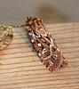 True Lover's Knot Moth