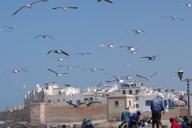 Maroc 2008 297