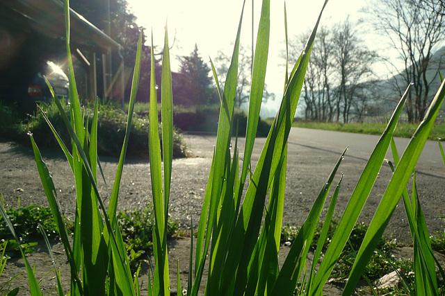 Frühlingsimpressionen beim morgendlichen Gang zum Bad in die Elbe