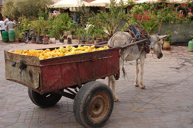 Maroc 2008 148