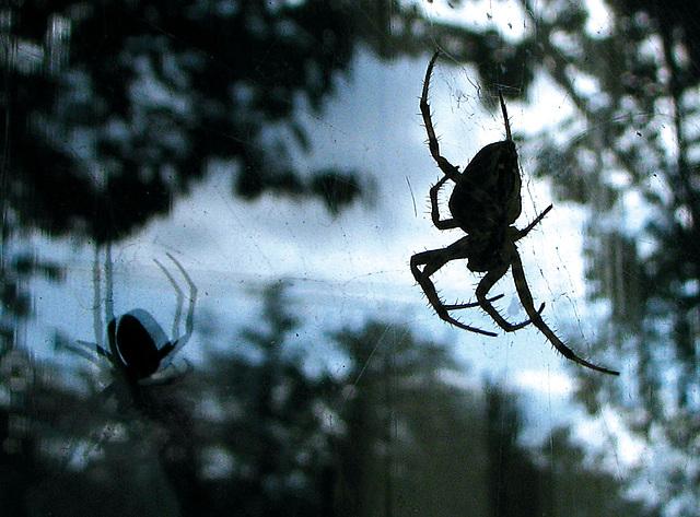 Spider(man? woman ?)