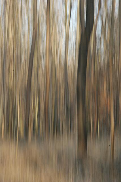 dans la forêt de L'Illwald
