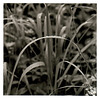 Gräser im Mai