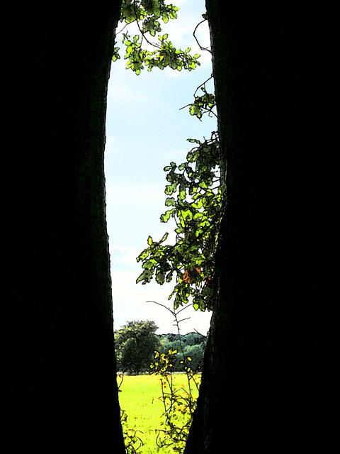 Fenster im Baum