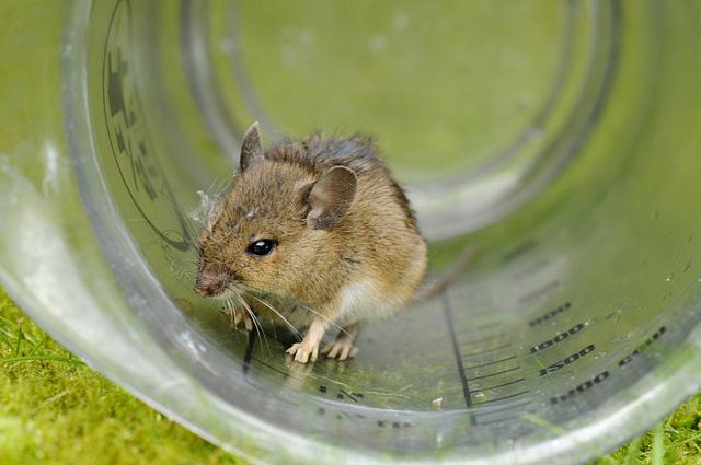 Maus - die Zweite