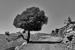 Lonesome Tree - 1