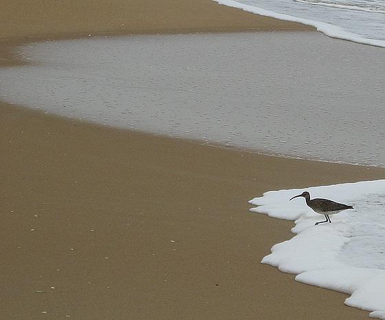 Bird in the foam