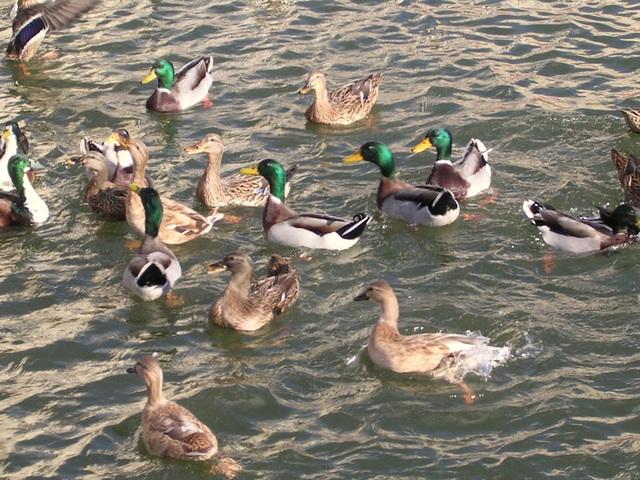 Vitrolles 13 Lac de la Tuilière