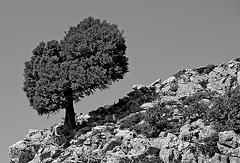 Lonesome Tree - 2