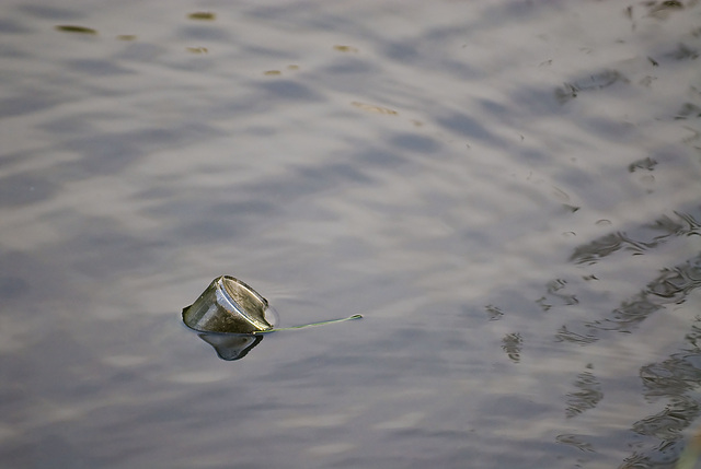 No message in a bottle
