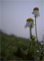 im Regen vor dem ersten Frost