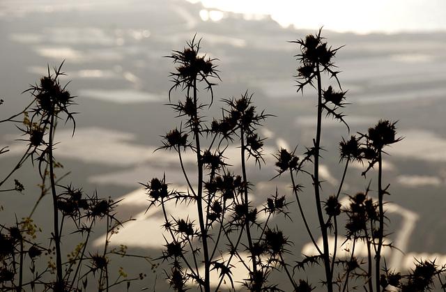 Spiky silhouette......