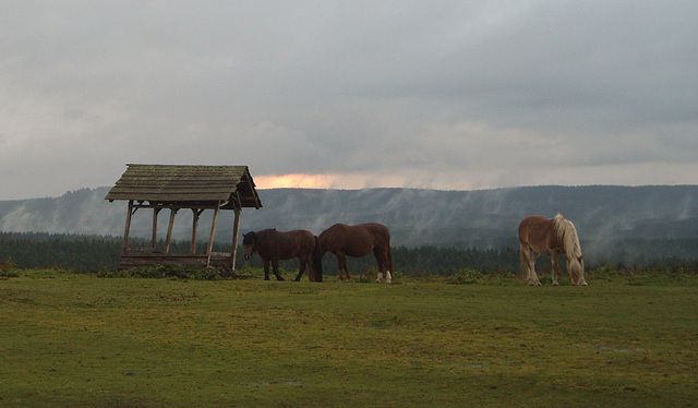 Pferdekoppel im Harz