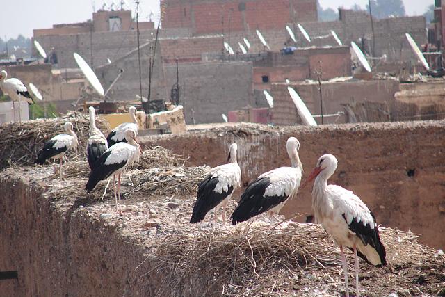 Maroc 2008 207