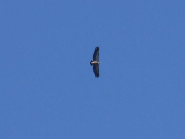 Vulturo