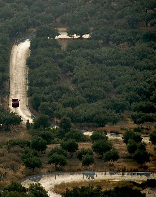 The olive grove road