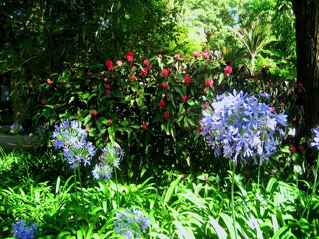 Lisboa, Garden of Estrela (5)
